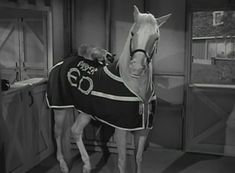 Mr Ed and Siamese cat 60s Tv Shows, The Mister, Classic Comedies, Siamese Cats, Horse Art, Favorite Tv Shows, Childhood Memories, Robin, Harvester
