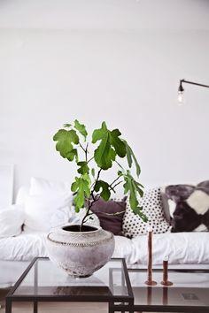Startskott för trädgården | Helt enkelt