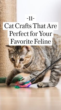 11Cat Crafts That Are Perfect for Your Favorite Feline