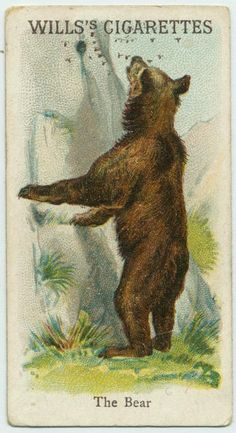 The Bear - Animals & Birds series for Will's Cigarettes from The New York Public Library Digital Collections. Bison Print, Collectible Cards, Collector Cards, Bear Art, New York Public Library, Vintage Labels, S Pic, Vintage Paper, Natural History