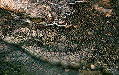 Tim Flach photographie les Animaux en Voie de D'Extinction (41)