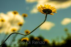 Points of view by Maurizio Di Renzo on Point Of View, Great Photos, Flora, Backyard, Plants, Photograph, Garden, Friends, Collection