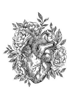 Tattoo Ideas Female Discover Anatomical heart with flowers by Erzebet S Home Decor Digital Art - Anatomical Heart With Flowers by Erzebet S Heart Anatomy Drawing, Anatomical Heart Drawing, Anatomical Tattoos, Anatomy Art, Heart Anatomy Tattoo, Heart Illustration, Medical Art, Heart Art, Gravure