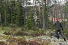 Jänisjemma: tracking with dog