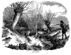 RABBIT-SHOOTING.—FEBRUARY . The Penny Illustrated Paper (London, England), Saturday, February 22, 1862