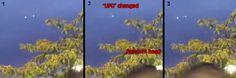 Strange lights recorded in Concorde, NH