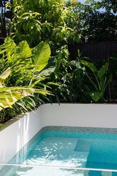 Lush foliages surround the pool