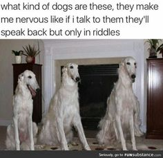 Check out the funniest memes, funny GIFs and hilarious videos that make you laugh out loud in public! Funny Animal Memes, Cute Funny Animals, Dog Memes, Funny Animal Pictures, Funny Cute, The Funny, Funny Dogs, Funny Memes, Animal Pics