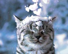 Snow falling on cat's head