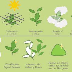 Este dibujo muestra el proceso que realizamos para obtener la mejor calidad de nuestro #TéMatcha 100% orgánico www.matchachile.com