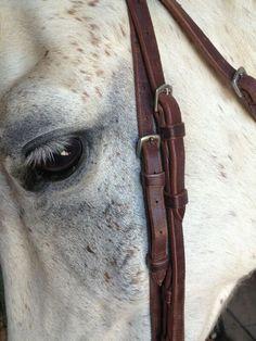 White horse..