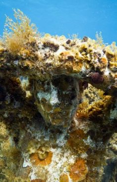 Jason deCaires Taylor - The Silent Evolution (MUSA Cancoon Underwater Museum) Underwater Photography, Travel Photography, Jason Decaires Taylor, Alex Garland, Underwater Sculpture, Shipwreck, Corals, Under The Sea, Simply Beautiful