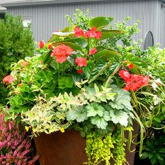 A custom container garden planting can add the right touch of sophistication and allure to your space.