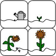 Sunflower life cycle cards from Making Learning Fun.