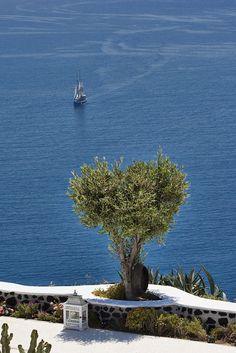 Olive tree by the sea, Santorini, Greece Santorini Luxury Hotels, Luxury Suites, Places Around The World, Around The Worlds, Beautiful World, Beautiful Places, Myconos, Olive Tree, Greece Travel