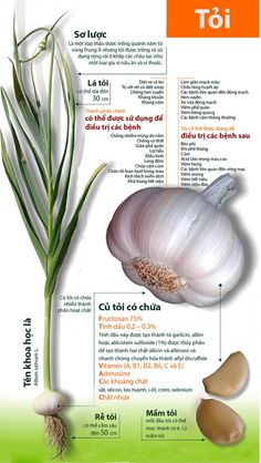 natural health Benefits of Garlic Infographic Natural Medicine, Herbal Medicine, Natural Cures, Natural Healing, Health And Nutrition, Health Tips, Health Fitness, Fitness Hacks, Medicinal Plants