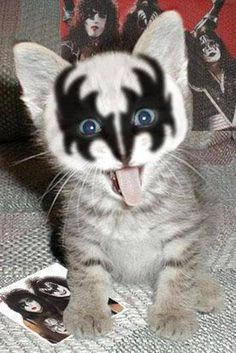 I...wanna rock and roll ALL NIGHT....and party EVERY DAY!! ~~ KISS Cat <3 ...........click here to find out more http://googydog.com