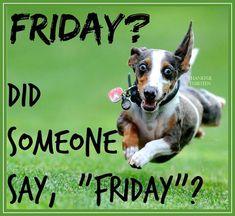 Did Someone Say Friday friday happy friday tgif friday quotes friday quote friday humor funny friday quotes quotes about friday