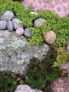 Kivikkopuutarha Rock Garden Plants, Garden Pool, Forest Garden, Woodland Garden, Outdoor Projects, Garden Projects, Garden On A Hill, Garden Cottage, Dream Garden