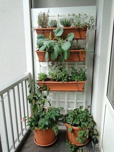 veggie garden growing and growing