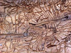 termites vs tree.