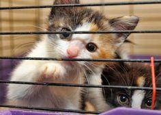 Chaton ou un chat Adulte ?
