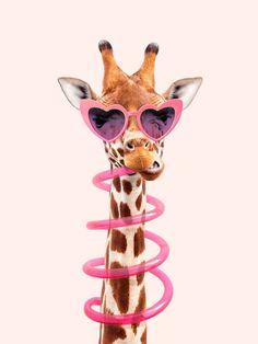 Tier Wallpaper, Animal Wallpaper, Giraffe Art, Cute Giraffe, Giraffe Drawing, Funny Giraffe, Cute Baby Animals, Funny Animals, Wild Animals