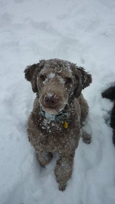 Are ice melts safe for dogs and cats? Is there a safe ice melt to use around pets? Read about the different ice melt options and their effects on your pets.