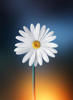 White by Bess Hamiti on 500px