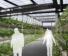 A vision to turn an old factory on The Hill in St. Louis into a hydroponic tomato farm to supply all those Italian restaurants. Also in the proposal: a green grocery store, residences and a culinary school.