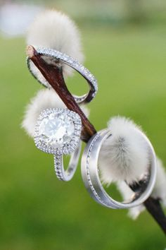 Gorgeous ring shot idea (CATKIN !!!) - Huntington Wedding at Windekind Farm from Zac Wolf Photography