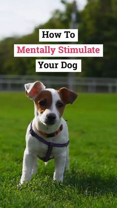Dogs need mental stimulation just as much as they need regular exercise. Unfortunately, many dog owners tend to think that physical activity alone will be enough to stimulate their dog's mind. Agility Training For Dogs, Training Your Puppy, Dog Training Tips, Brain Training, Training Courses, Training Programs, Dog Minding, Easiest Dogs To Train, How To Train Dogs