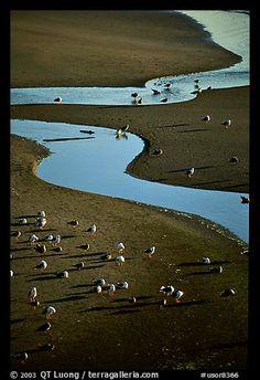 Seabirds and stream on beach. Oregon, USA (color)