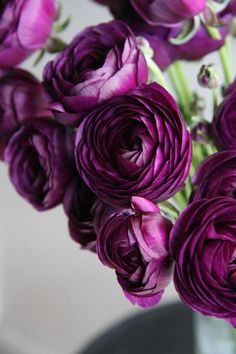 Happiness Flower Love the deep purple ~