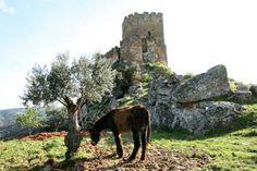 Conquistámos o Castelo de Algoso! Por Tierras D L Rei 2014. Fotografia de Cláudia Costa. Courtesy: AEPGA - Associação para o Estudo e Protecção do Gado Asinino, Atenor (Portugal).