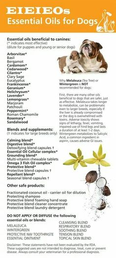 Essential oils list for dogs