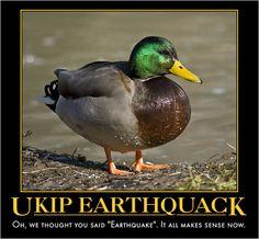 Ukip, Duck, Earthquack