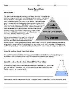 Students will follow the steps of the scientific method as they use common lab equipment and household items to create a model of an energy pyramid. Students will perform simple math equations to calculate the percent energy transferred from one trophic level to the next, and analyze the collected data to determine how energy flows through an ecosystem.