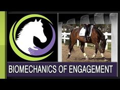 Engage Your Horse's Back In Order To Develop Your Horse's Topline - The Thinking Equestrian