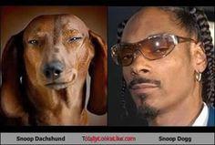 Snoop Dachshund