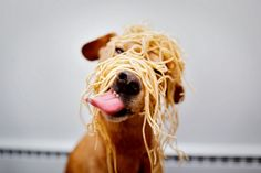 Is This the Real SpaghettiMonster?...   Or an impasta?! / via CuteOverload