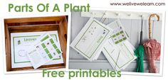 Parts Of A Plant – Writing pages & Information booklet