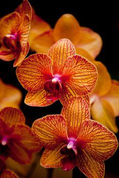 Orquídeas en casa: cómo cultivarlas con éxito (2) Clic en la imagen para leer el artículo.