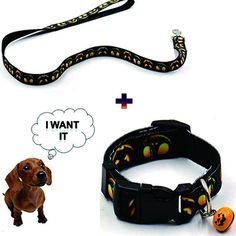 Treat Me Adjustable Pet Collar Set for Outdoor Training personalized Dog Hunting Collar Set with Small Bell >>> For more information, visit image link. (This is an affiliate link) #DogCarriers