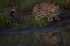 Marius Coetzee: The Ultimate Photo Safari African Wild Dog, African Safari, Sand Game, Game Reserve, Wild Dogs, Hidden Treasures, Continents, National Geographic, Skeleton