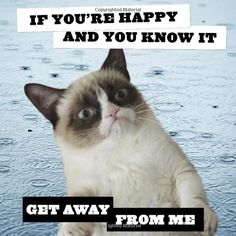 Grumpy Cat 2014 Wall Calendar: Chronicle Books: 9781452126609: Amazon.com: Books