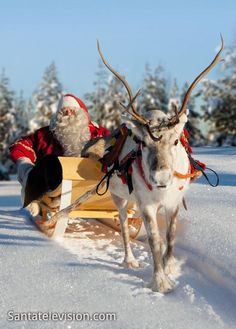 (174) In Finland you can take part in sleigh rides lead by Rudolph #Finland #Lapland #Winter | CHRISTMAS MAGIC | Pinterest