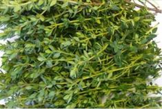 powerful-herb-destroys-stomach-aches-diarrhea-arthritis-sore-throat-flu-virus