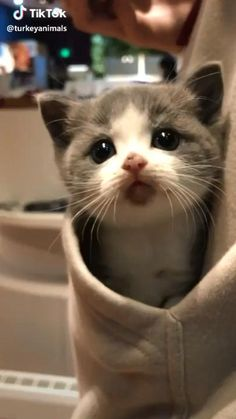 Cute Baby Cats, Cute Little Animals, Cute Cats And Kittens, Cute Funny Animals, Kittens Cutest, Cute Dogs, Cute Babies, Fluffy Kittens, Humorous Animals