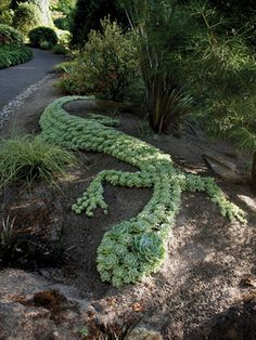 Hundreds of Echeveria 'Imbricata' were used to create this giant lizard sculpture, perfectly placed on a slightly mounded berm for better drainage. - State-by-State Gardening
